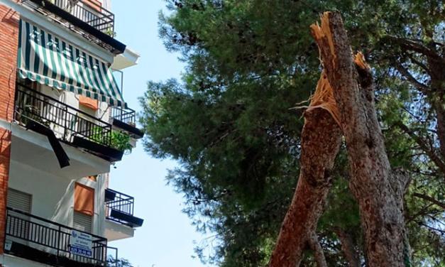El PP de Altura exige soluciones para la rotura de pinos