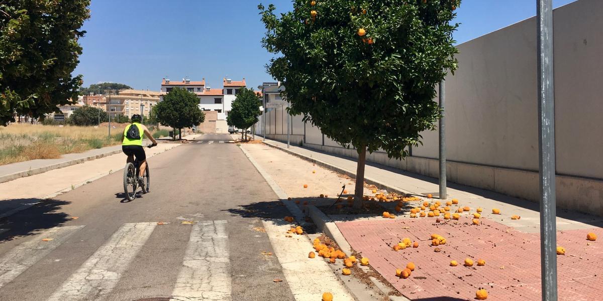 Los desperdicios ensucian la imagen turística de Segorbe