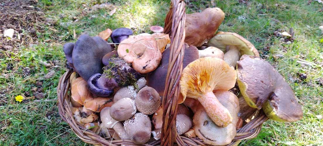 Excursiones micológicas gratuitas en Jérica y El Toro