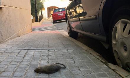 Aparecen perros, gatos y ratas envenenados en Segorbe
