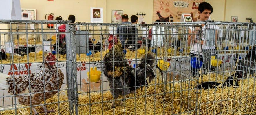 Sot de Ferrer celebra la III Feria Avícola Valle del Palancia