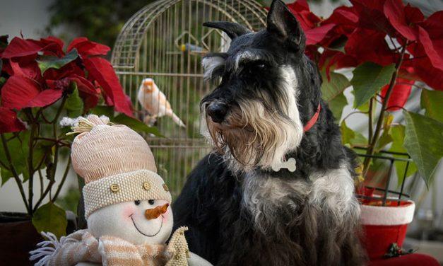 Clínica Veterinaria Segorbe organiza un Concurso Navideño de mascotas