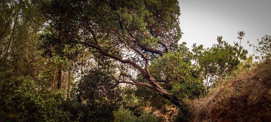 Diputación dará 160.000 para proteger los árboles monumentales de la comarca