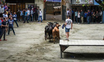 El Ayuntamiento no da permiso a la Peña Mucho Arte para hacer toros en el Almudín