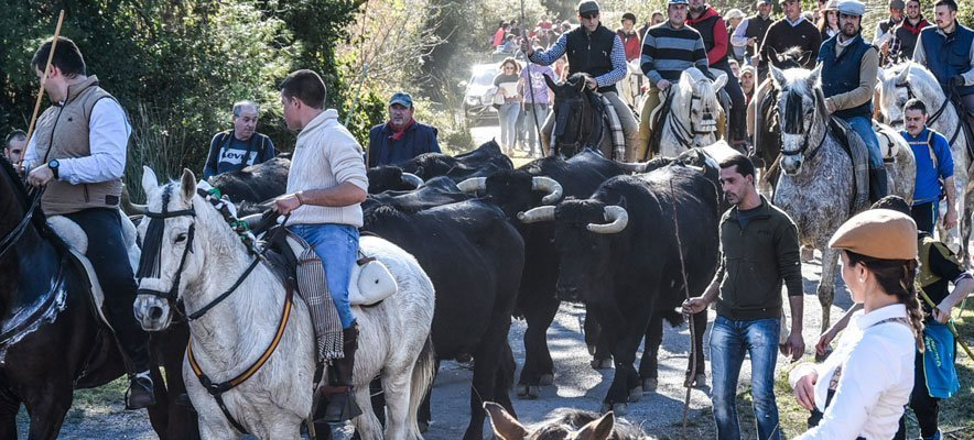 Viver celebra una exitosa Fiesta Campera por San Antón