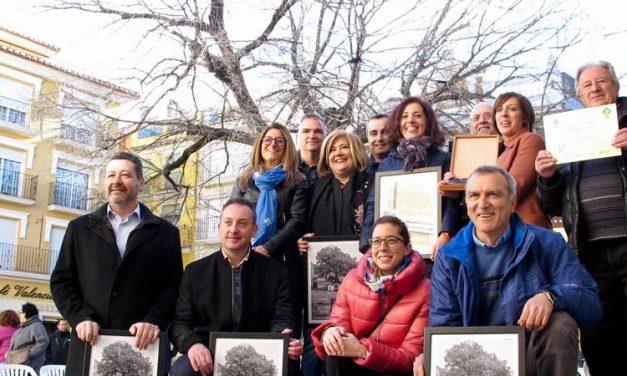 El Olmo de Navajas será propuesto como Árbol Monumental de la Comunitat