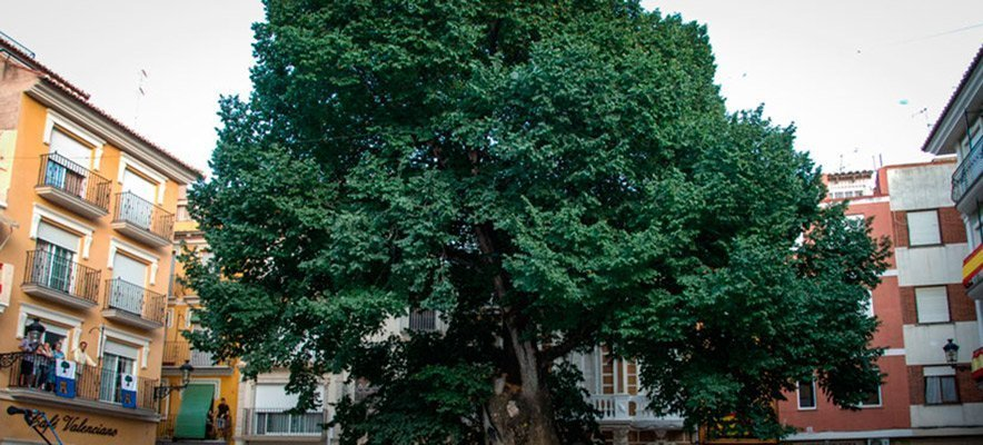 Navajas acoge un simposio nacional sobre árboles singulares