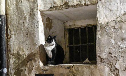 Segorbe saca a concurso el servicio de recogida de animales