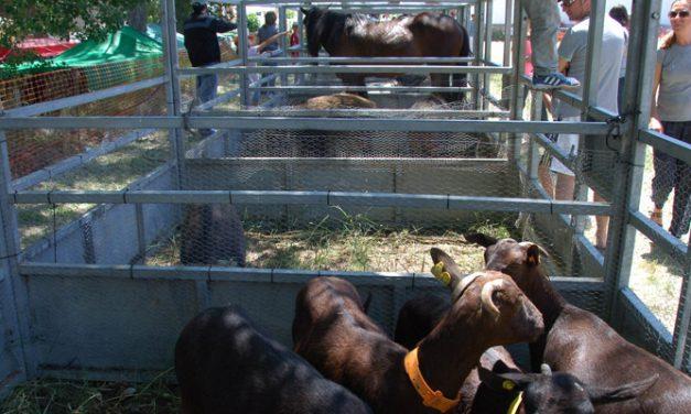 Barracas celebra este fin de semana la Feria Agrícola y Ganadera