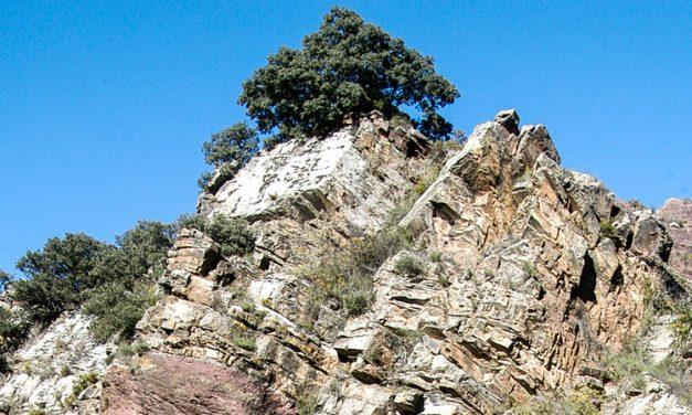 La Umbria de Algimia de Almonacid declarada Microrreserva de Flora
