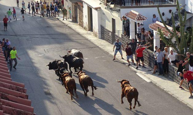 Altura presenta las ganaderías participantes en las Fiestas