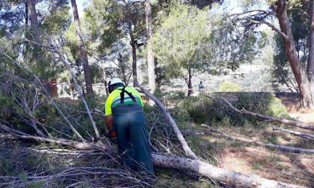 Talan pinos para hacer excavaciones en el castillo de Segorbe