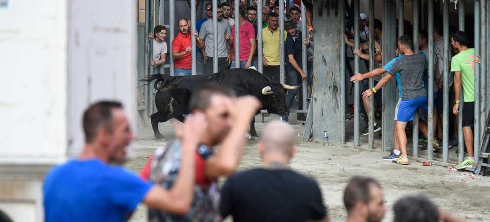 Un joven es corneado por un toro en las Fiestas de Segorbe