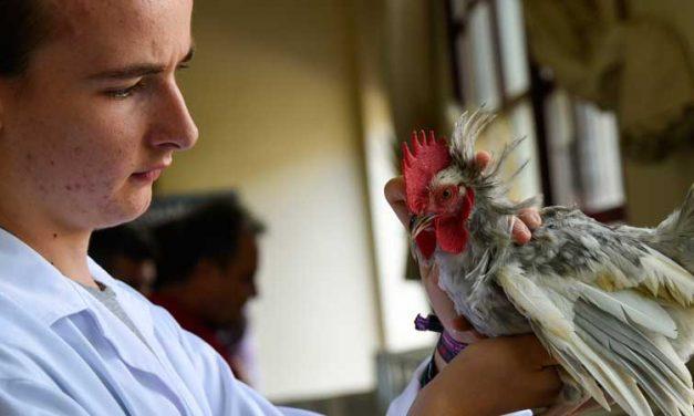 Sot de Ferrer celebrará la IV Feria Avícola