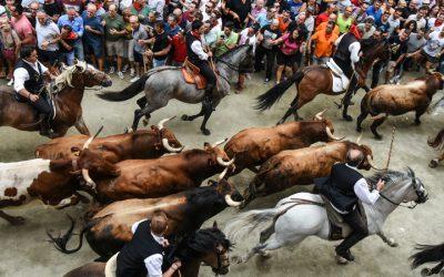 La Entrada de Toros y Caballos distinguida con el Premio a las Tradiciones Taurinas