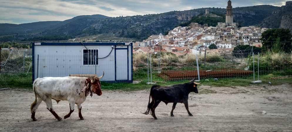 La huida de tres vacas y un toro capón obliga a parar un tren en Jérica