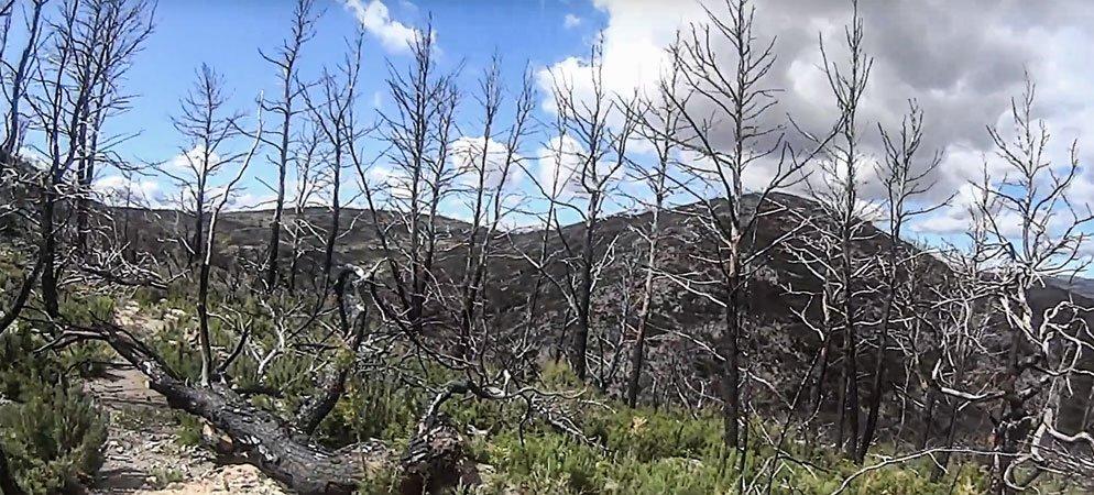 Las Torrecillas y los Llanos de Gaetano de Altura serán repoblados