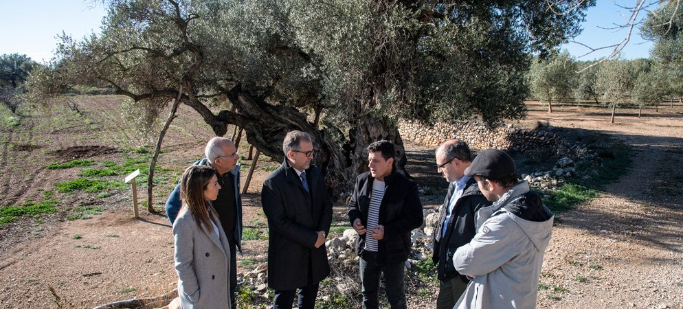 Diputación colocará paneles informativos en los árboles monumentales