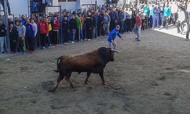 Castellnovo abre en la provincia el programa taurino de San Antón