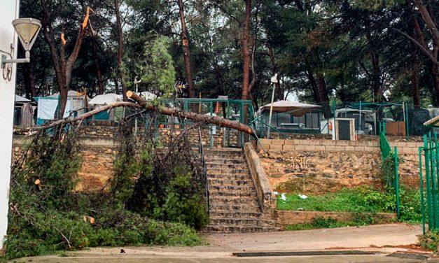 Altura desaloja a los campistas para sanear la pinada de la Glorieta