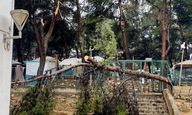 El temporal  derribó varios pinos en el Camping de Altura