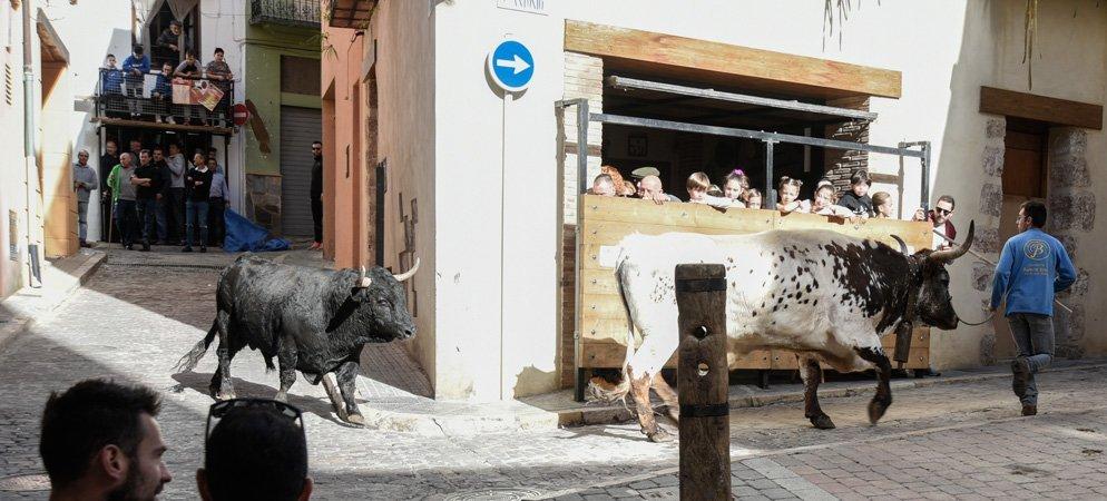 Fin de semana de calor para los toros de San Antón