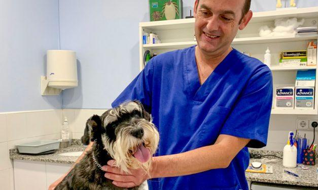 Clínica Veterinaria Segorbe informa de que los animales domésticos no transmiten el COVID 19