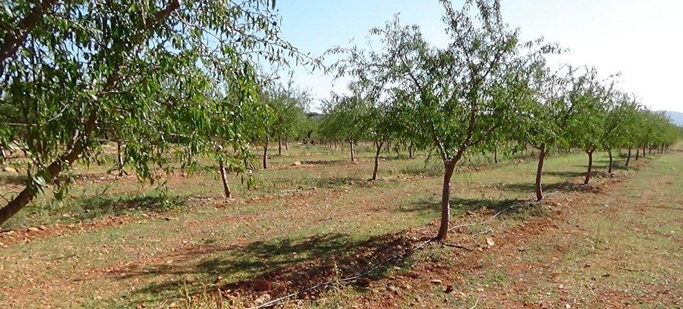 Segorbe destina 18.000 € para ayudar a los agrcultores