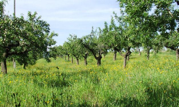 El Gobierno decide permitir la actividad agrícola no profesional