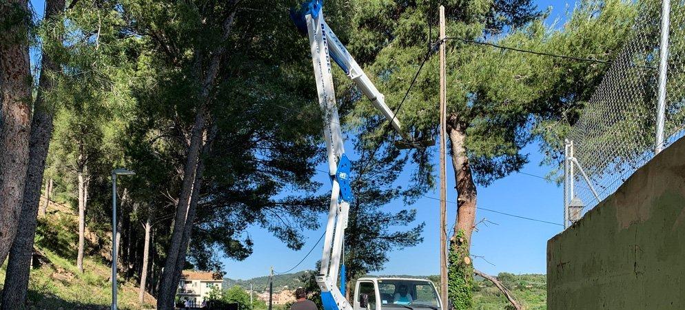 Talan un alto pino en el camino La Tebaida por peligro de desplome