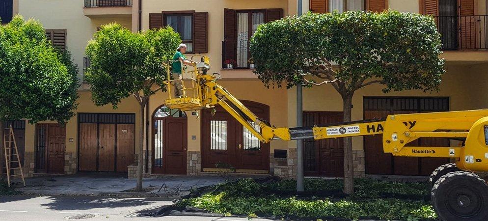 Jardinería eVerde poda los árboles de las calles de Segorbe