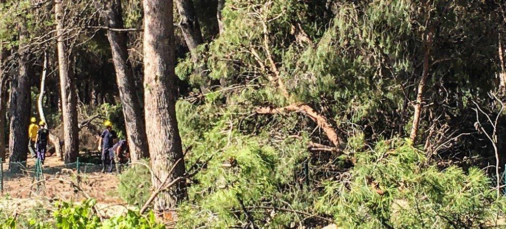 La tala de pinos en la Glorieta de Altura precisa maquinaria especial