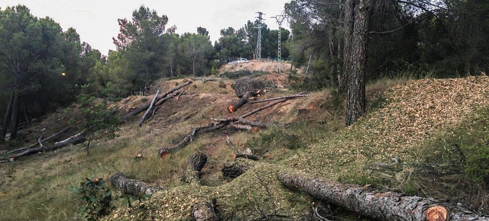 Iberdrola tala y limpia los pinos del pasillo eléctrico del Monte San Blas de Segorbe