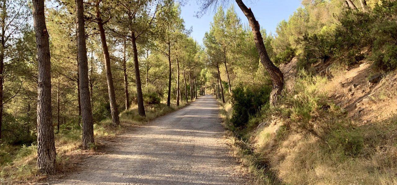 Medio centenar de vecinos de Villanueva de Viver crean una agrupación para cuidar el monte