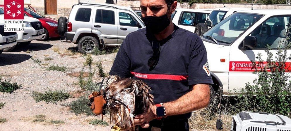 Los bomberos rescatan a un águila en una balsa de Altura