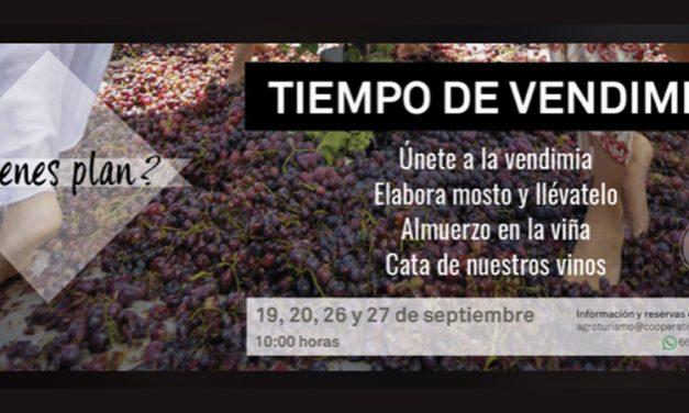 La Cooperativa de Viver lanza la campaña «Tiempo de vendimia»