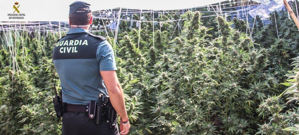 Desmantelan 2 invernaderos de cultivo de marihuana en Segorbe