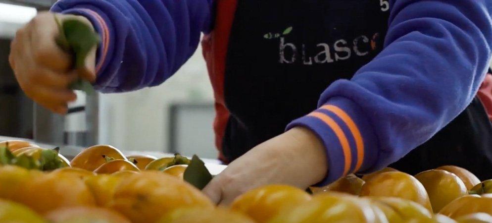 La empresa segorbina «Blasco Fruit»  gana el Premio a la Exportación de la Cámara