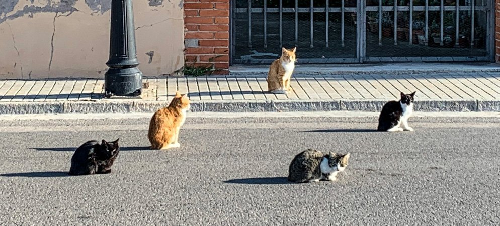 Actuaciones para acabar con la suciedad e insalubridad de las colonias de gatos