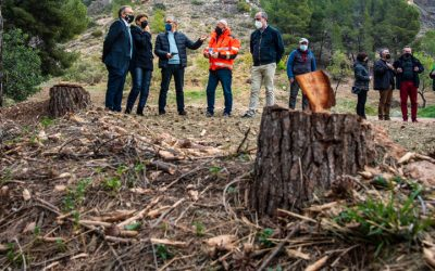 Diputación hace una limpieza forestal en Cárrica para prevenir incendios