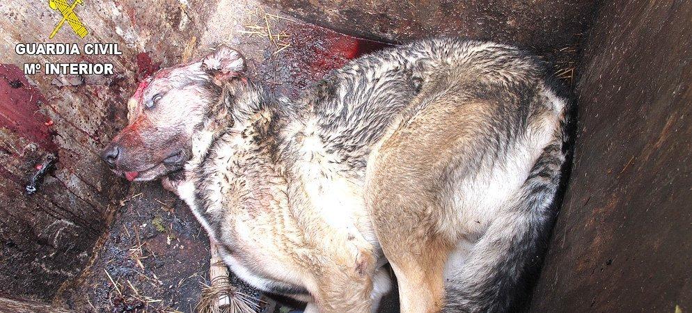 Seprona detiene a un hombre por presuntamente matar a su perro en Viver