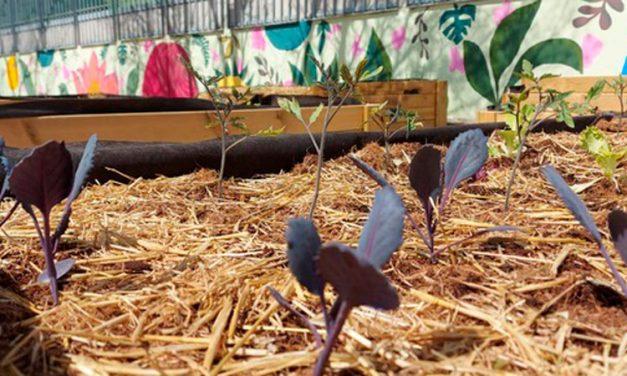 Empieza a florece el huerto escolar del Pintor Camaron de Segorbe