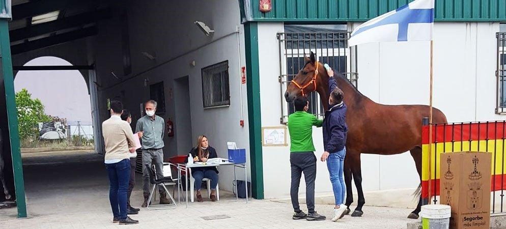 Más de medio centenar de caballos participantes en el Concurso Nacional  de Segorbe