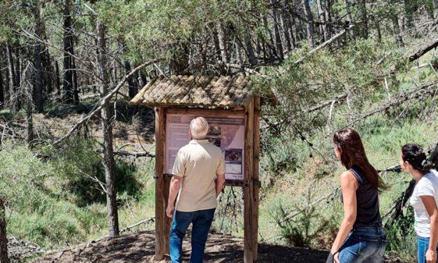 La Conselleria da marcha atrás y accede a retirar los pinos muertos de Torás