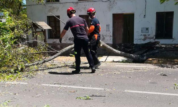 Retiran un pino desplomado sobre la carretera Soneja -Azuébar