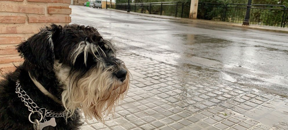 Las tormentas dejan resultados de lluvia irregular en la comarca