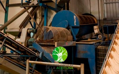 Impulso de la economía circular de la oliva
