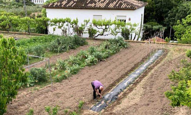 Segorbe subvenciona la compra de maquinaria agrícola